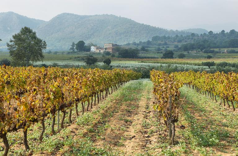dati sul settore agroalimentare italiano