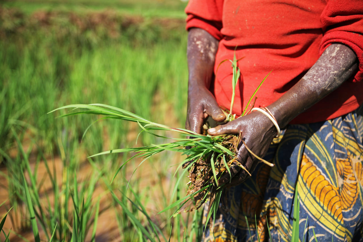 agribusiness in africa